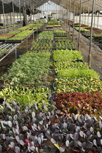 Sunnyside Organic Seedlings greenhouse